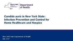 Candida auris in New York State Infection Prevention