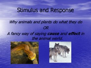 Stimulus and Response Why animals and plants do