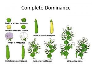 Complete Dominance Purebred snapdragons were crossed with purebred