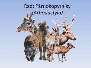 Rad Prnokopytnky Artiodactyla Rad Prnokopytnky Artiodactyla oporu tela