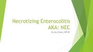 Necrotizing Enterocolitis AKA NEC By Amy Scheer NNPBC