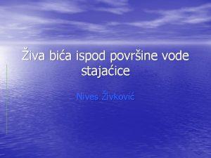 iva bia ispod povrine vode stajaice Nives ivkovi