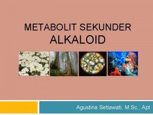 METABOLIT SEKUNDER ALKALOID Agustina Setiawati M Sc Apt
