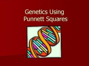 Genetics Using Punnett Squares Early Genetics The study
