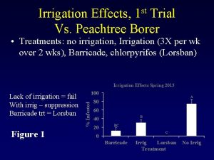 Irrigation Effects 1 st Trial Vs Peachtree Borer