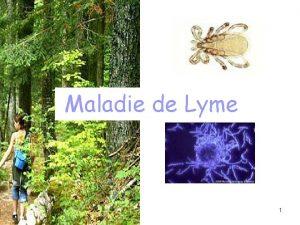 Maladie de Lyme 1 Plan Introduction La maladie