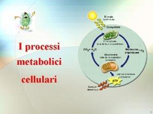 I processi metabolici cellulari 1 Metabolismo E linsieme