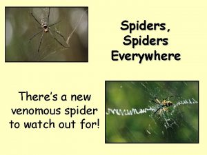 Spiders Spiders Everywhere Theres a new venomous spider