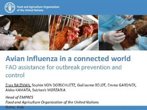 Avian Influenza in a connected world FAO assistance