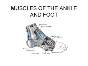 MUSCLES OF THE ANKLE AND FOOT Ankle and