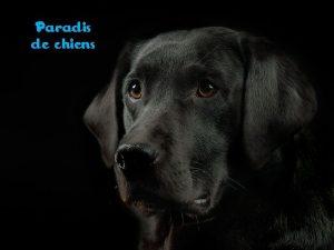 Paradis de chiens Imagine un endroit avec des