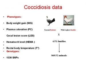 Coccidiosis data Phenotypes Body weight gain WG Plasma