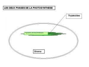 LES DEUX PHASES DE LA PHOTOSYNTHESE Thylakodes Pigments