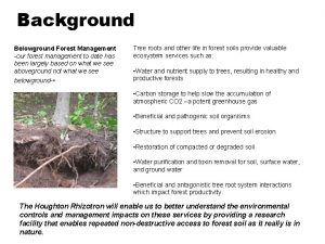 Background Belowground Forest Management our forest management to