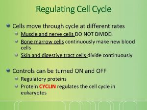 Regulating Cell Cycle Cells move through cycle at