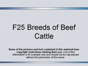 F 25 Breeds of Beef Cattle Some of