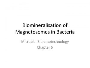 Biomineralisation of Magnetosomes in Bacteria Microbial Bionanotechnology Chapter