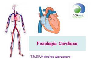 Fisiologa Cardaca T R E P H Andrea