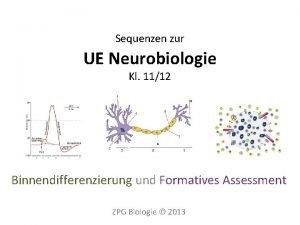 Sequenzen zur UE Neurobiologie Kl 1112 Binnendifferenzierung und