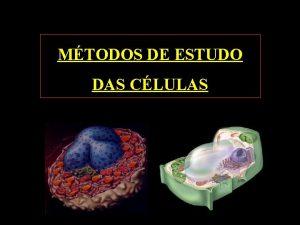 MTODOS DE ESTUDO DAS CLULAS Seres Vivos Clulas