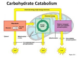 Carbohydrate Catabolism Figure 24 5 Glycolysis Glycolysis Start
