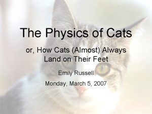 The Physics of Cats or How Cats Almost