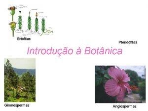 Brifitas Pteridfitas Introduo Botnica Gimnospermas Angiospermas O QUE