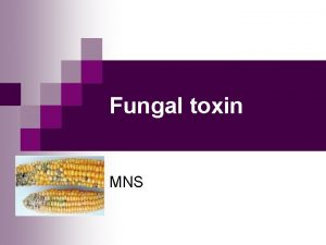 Fungal toxin MNS Fungal Toxins Mycotoxins formed by