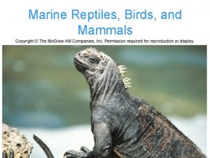 Marine Reptiles Birds and Mammals Vertebrates Vertebrates originated