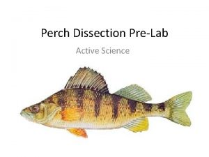 Perch Dissection PreLab Active Science Dissection Terms Anterior