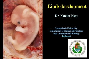 Limb development Dr Nandor Nagy Semmelweis University Department