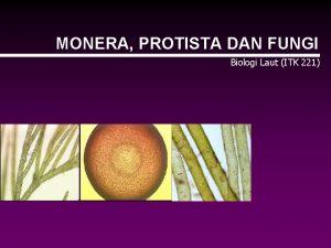 MONERA PROTISTA DAN FUNGI Biologi Laut ITK 221