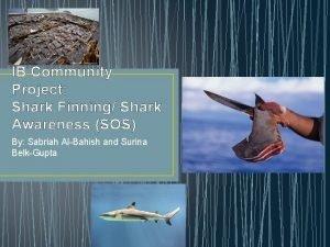 IB Community Project Shark Finning Shark Awareness SOS