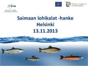 Saimaan lohikalat hanke Helsinki 13 11 2013 www