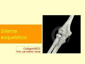 Sitema esqueltico Colgio INEDI Prof Luiz Antnio Tomaz