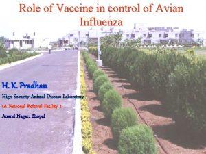 Role of Vaccine in control of Avian Influenza
