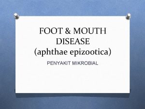 FOOT MOUTH DISEASE aphthae epizootica PENYAKIT MIKROBIAL Foot