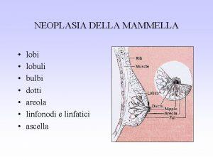 NEOPLASIA DELLA MAMMELLA lobi lobuli bulbi dotti areola