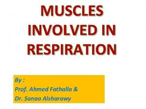 MUSCLES INVOLVED IN RESPIRATION By Prof Ahmed Fathalla