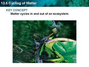 13 5 Cycling of Matter KEY CONCEPT Matter