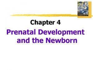 Chapter 4 Prenatal Development and the Newborn Prenatal