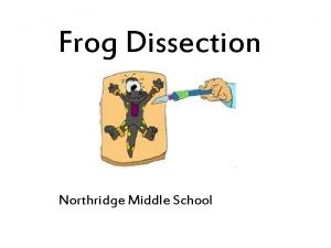 Frog Dissection Northridge Middle School External Anatomy Verify