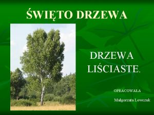 WITO DRZEWA LICIASTE OPRACOWAA Magorzata Lewczuk DRZEWA LICIASTE