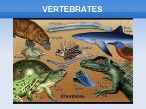 VERTEBRATES VERTEBRATES Characteristics of Vertebrates VERTEBRATES The main