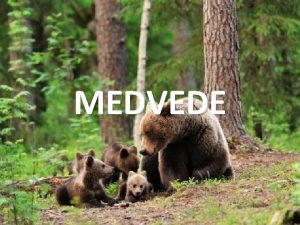 MEDVEDE Medve hned Ursus arctos Je druh cicavca