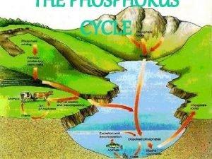 THE PHOSPHORUS CYCLE WHAT IS THE PHOSPHORUS CYCLE