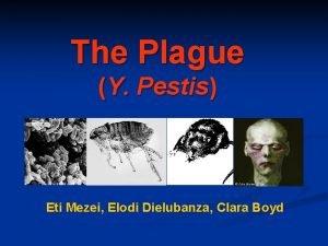 The Plague Y Pestis Eti Mezei Elodi Dielubanza