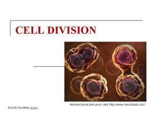 CELL DIVISION 2016 Paul Billiet ODWS Mesenchymal precursor