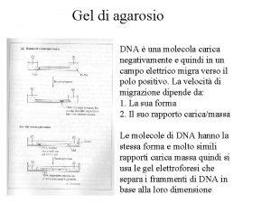 Gel di agarosio DNA una molecola carica negativamente