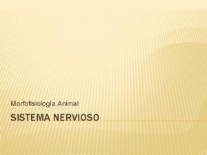 Morfofisiologa Animal SISTEMA NERVIOSO SISTEMA NERVIOSO La funcin